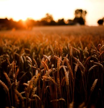 grains commodity